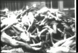 holocaust photos of the dead